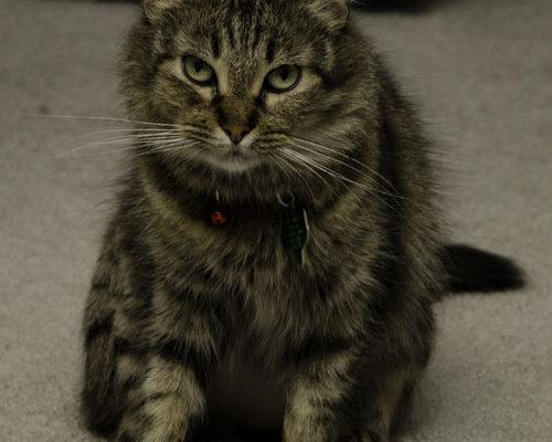 Meet Lily